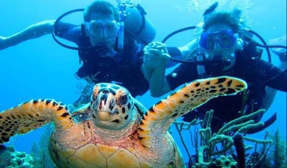 Roatan Honduras Roatan Best Scuba Diving Adventure Cruise