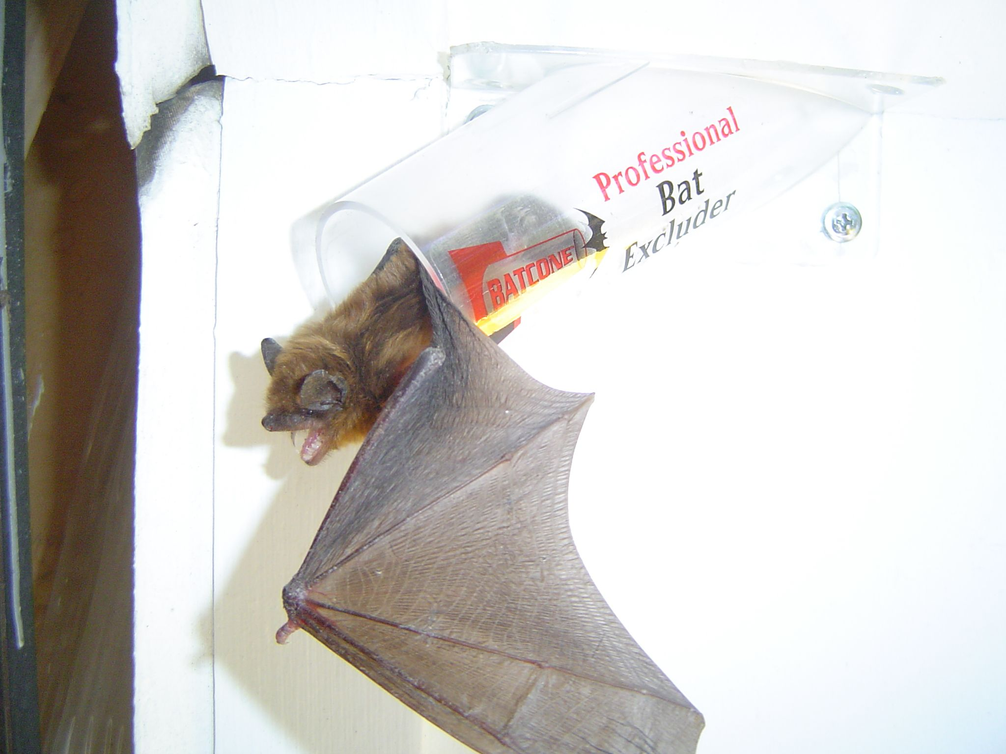 If you see a bat in your home, DON'T TOUCH IT! Give us a