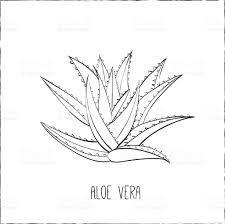 Image Result For Aloe Vera Plant Dessin Plante Tatouage