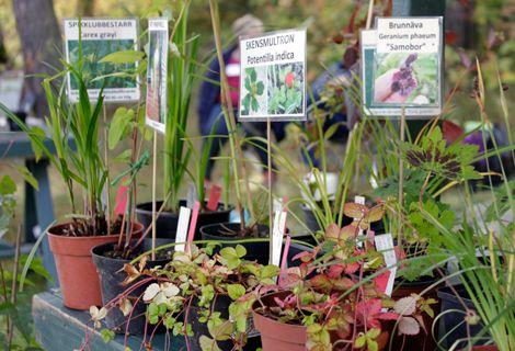 Växtmarknad