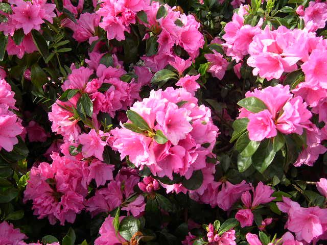 Pin Auf Southern Plants