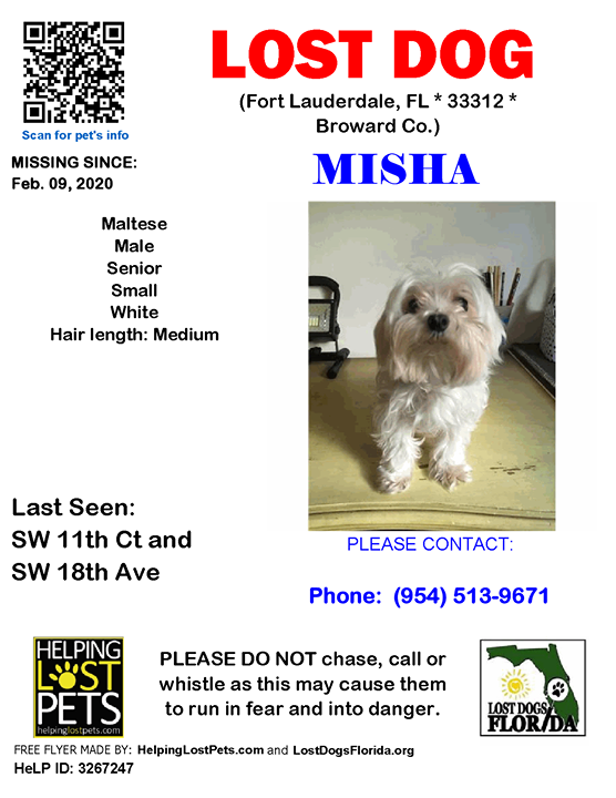 Misha Is Lost Have You Seen Him Lostdog Misha Fortlauderdale Sw 11th Ct Sw 18th Ave Fl 33312 Broward Co Dog 02 09 2020 Male Maltese White Mis In 2020