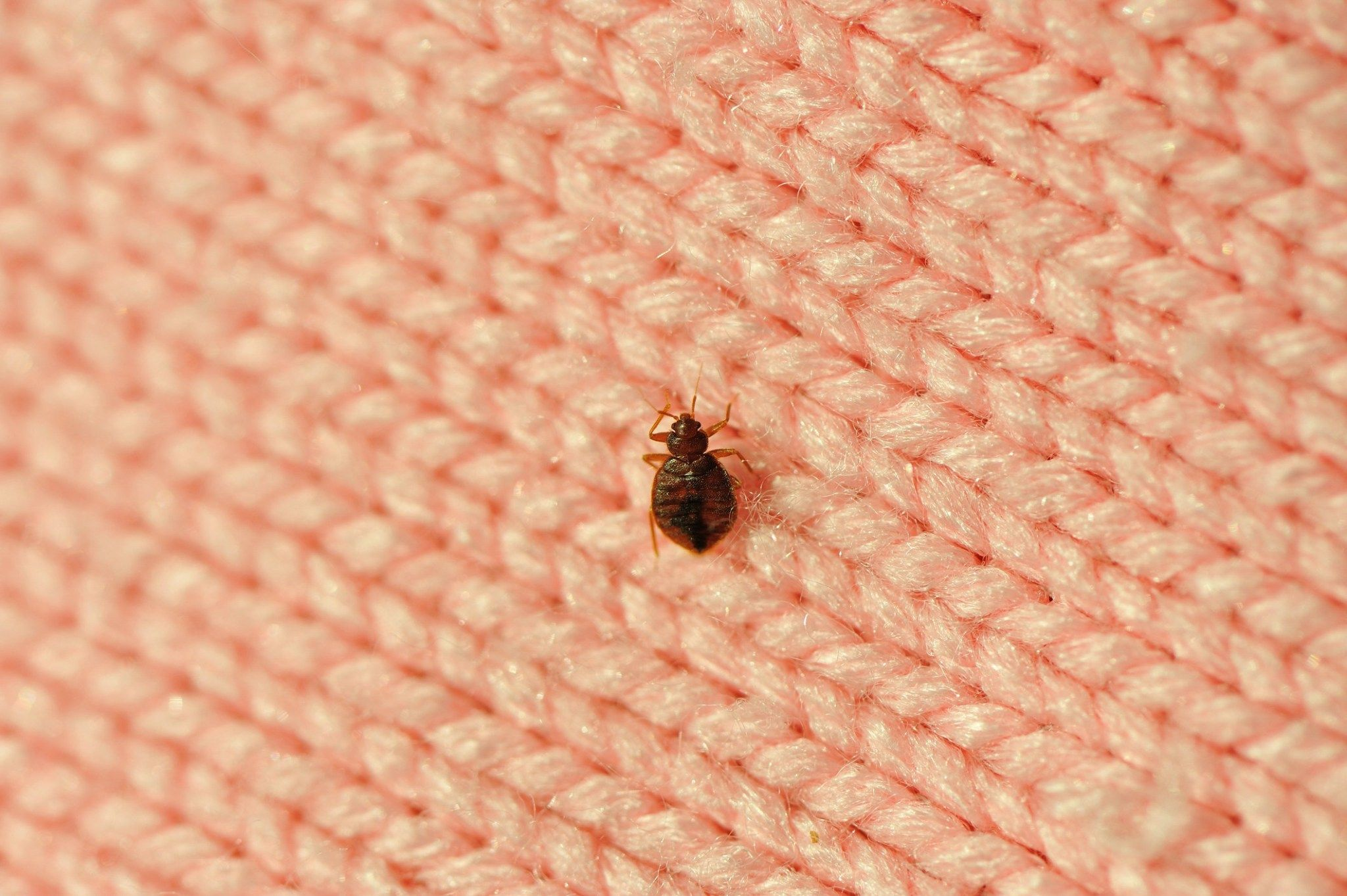 How We Caught Bedbugs Traveling And The Nightmare That Followed
