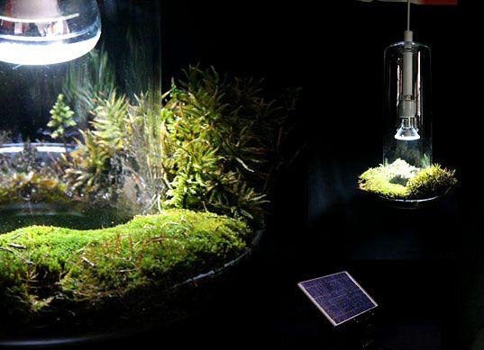 GREEN LIGHT Botanical L& Terrarium Air Filter All-In-One & GREEN LIGHT: Botanical Lamp Terrarium Air Filter All-In-One ... azcodes.com