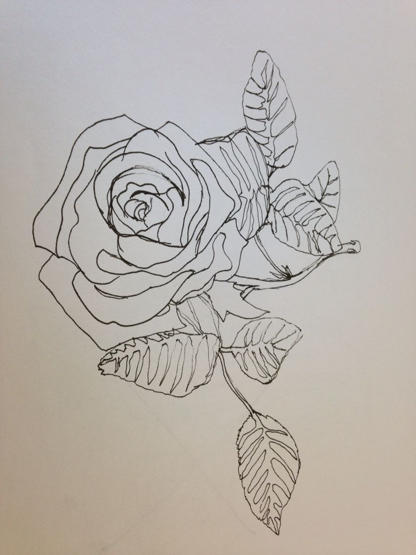 Contour Line Drawing Rose : Rose continuous line drawing sharpie inspiration