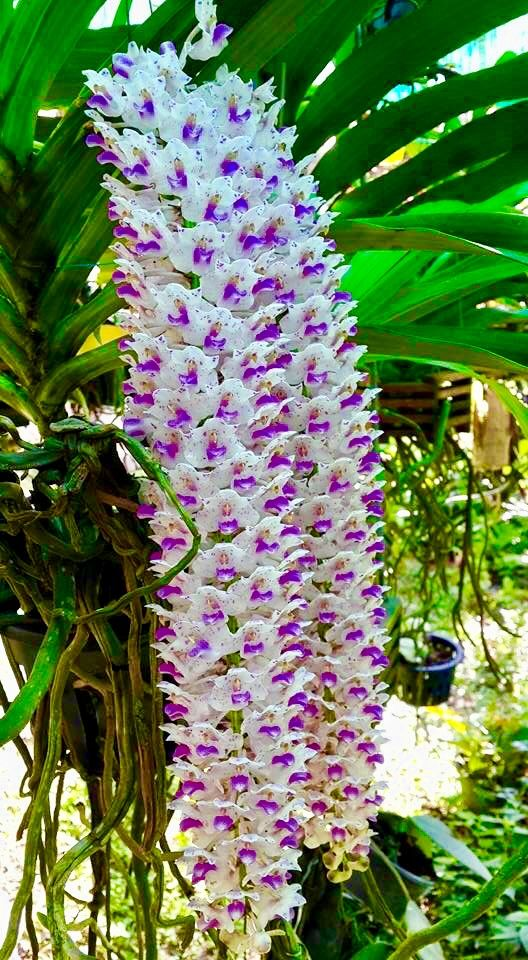 Pin by neptune pigors on me orchids society pinterest orchid actually there are so many types of white flowers around the world beautiful flowers white flower names list small white pretty wedding plants perennial mightylinksfo