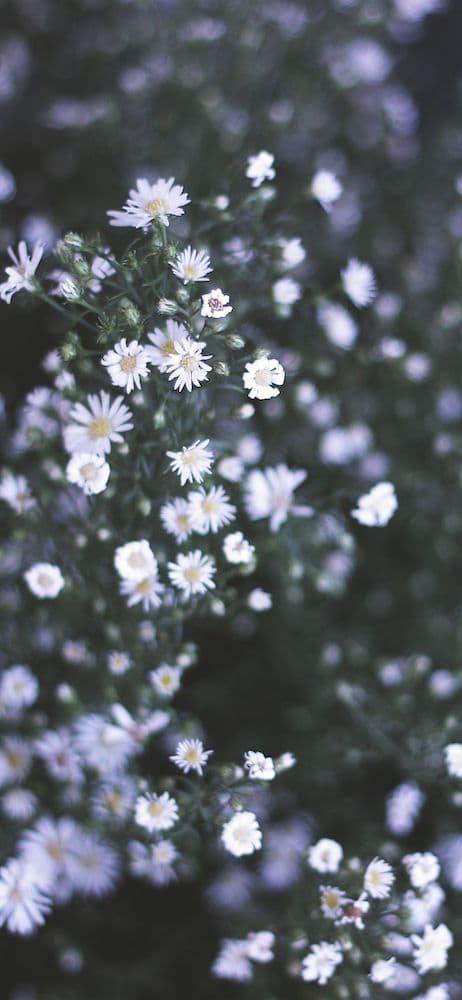 خلفيات ورد للايفون Pink Flowers Wallpaper Flower Wallpaper Hd Flower Wallpaper