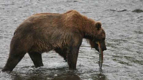 Bear Watching been there done that in Alaska.