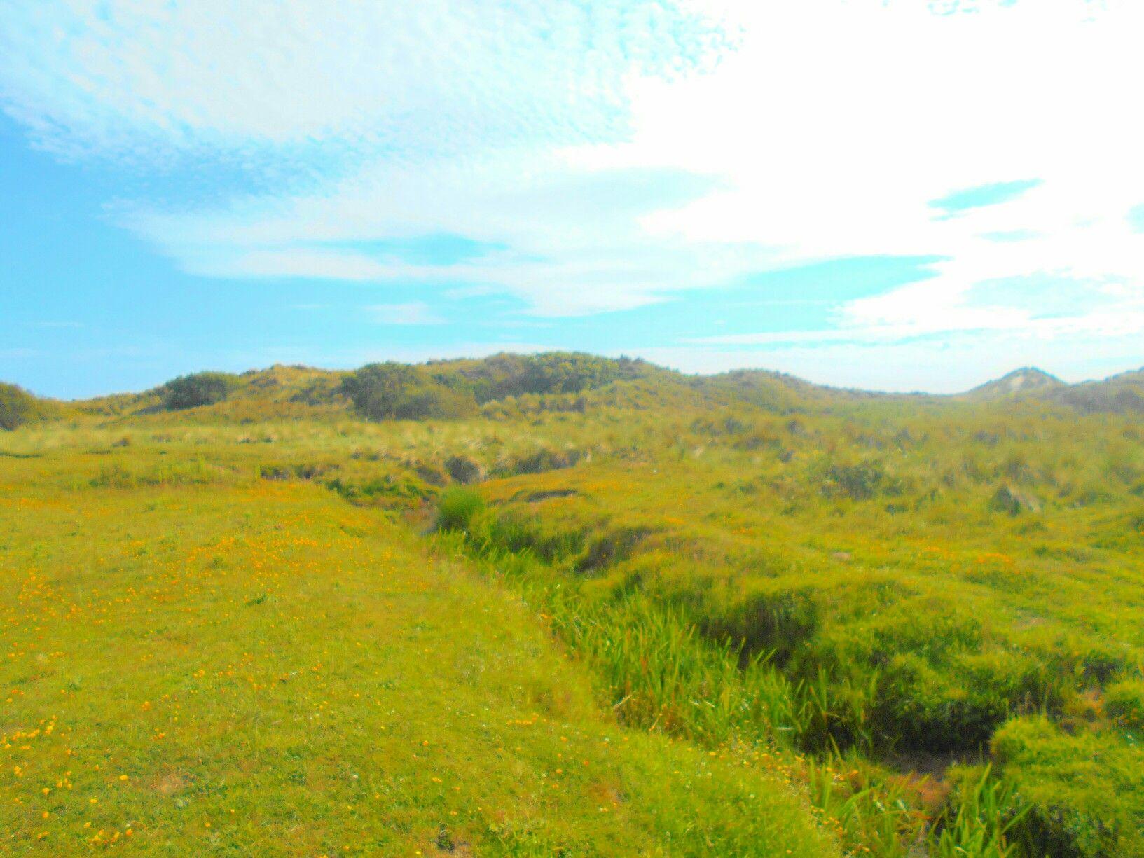 Dyffryn grass land Gwynedd Wales from Sarah Kay