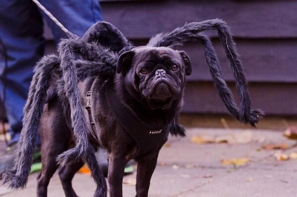 Halloween Pets by The Guardian on Twitter #halloween