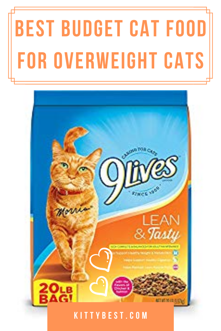 Best Cat Food For Overweight Cats In 2020 Best Cat Food Cat Food Cool Cats