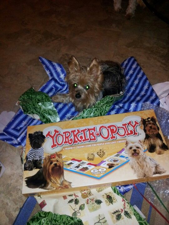 Yorkie games; i want that game...PLEASE | Yorkie, Yorkie ...