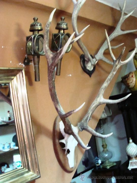 Antiguos cuernos de 10 puntas con frontal de venado o for Trofeos caza decoracion