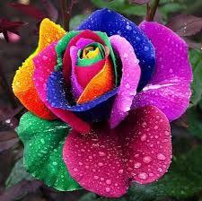 Resultado De Imagen Para Plantas Exoticas Flores Rosa Arcoiris