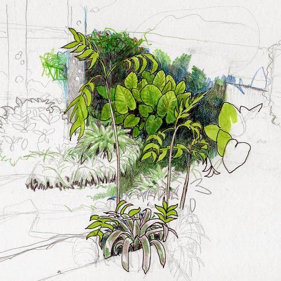 Plant Drawing Plan View