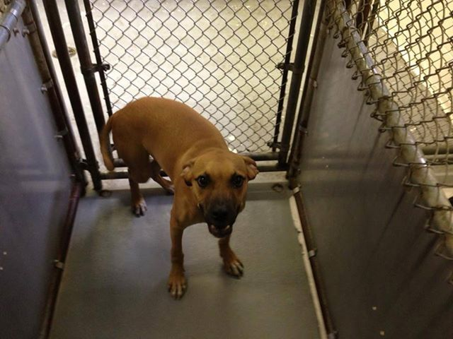 URGENT- SKYLOR IS IN A GASSING SHELTER IN BECKLEY WEST VIRGINIA. PLEASE EMAIL DOGHOUSE100@COMCAST.NET FOR DOGGY DETAILS AND APPLICATION. SHE IS 35 POUNDS AND 8 MONTHS OLD.TRANSPORT IS AVAILABLE FOR ALL APPROVED OUT OF STATE ADOPTIONS. THIS SHELTER...