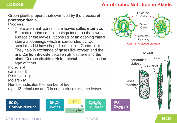 Learnhive Icse Grade 7 Biology Nutrition In Animals And Plants Lessons Exercises And Practice Tests Nutrition In Plants Plant Lessons Science Pics