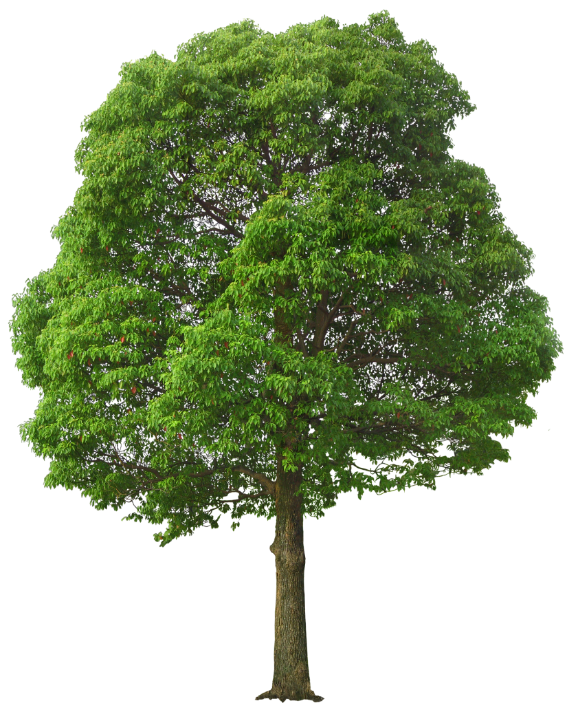 Large Green Tree PNG Picture | 풍곤 | Pinterest