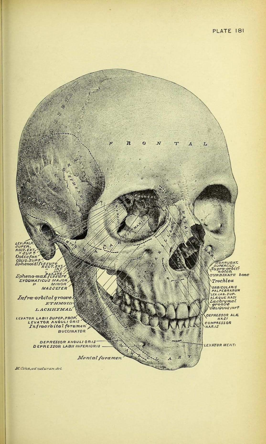 What The Apothecary Ordered Illustration From Practical Human
