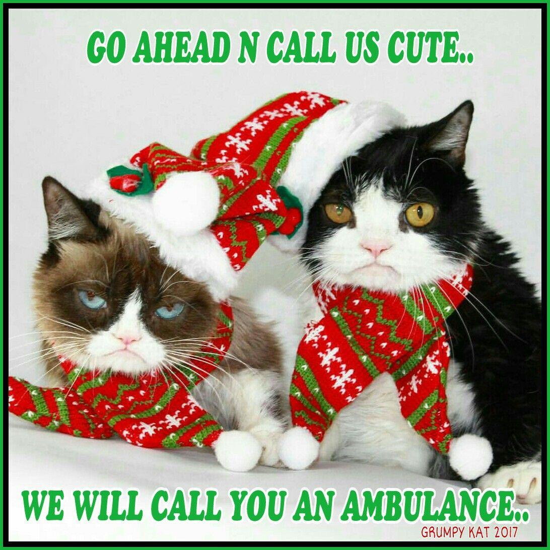 35e6bee0e0c768c697e1f491f3dabe42 another grumpy cat meme by the other grumpy kat 2017 grumpy cat n