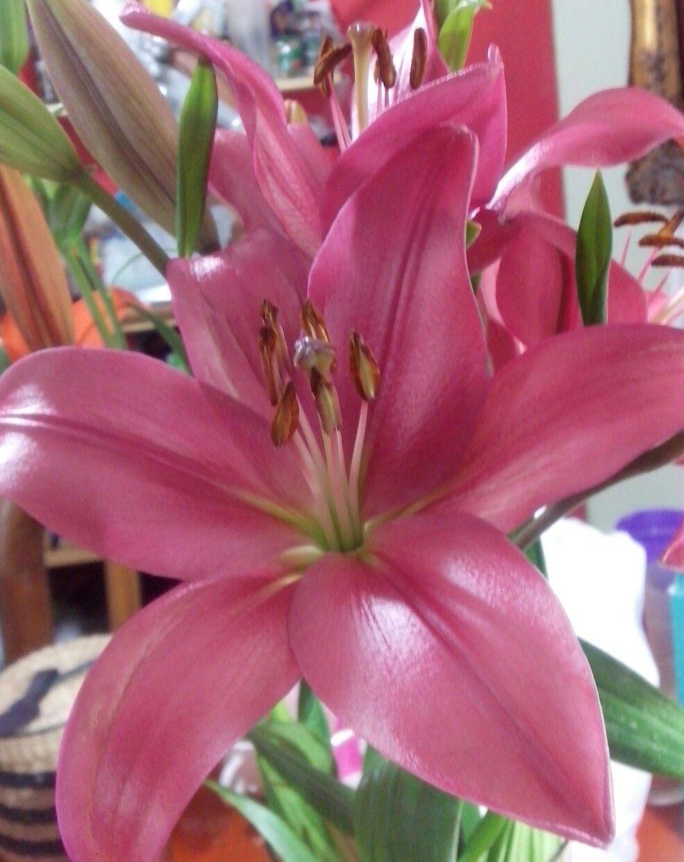 Pin by Valeska Massone on Especial de Flores Pinterest Flowers