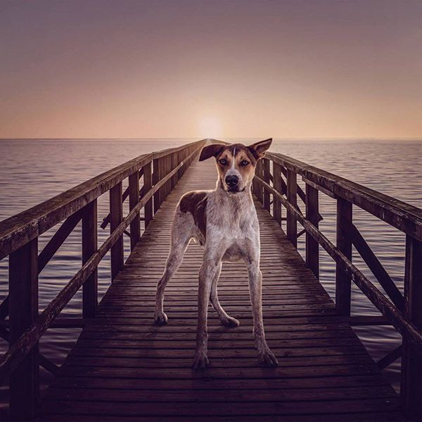 Wolfie – He's looking for the light at the end of the boardwalk.