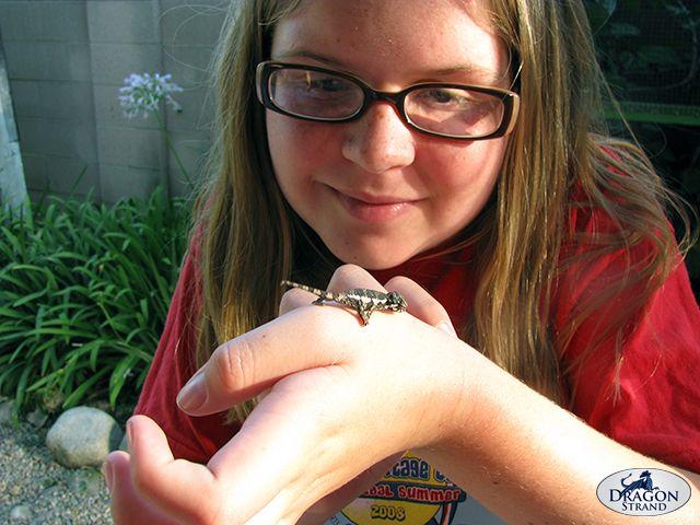 Are Chameleons Good Pets For Children Dragon Strand Jackson Chameleon Chameleon Pets