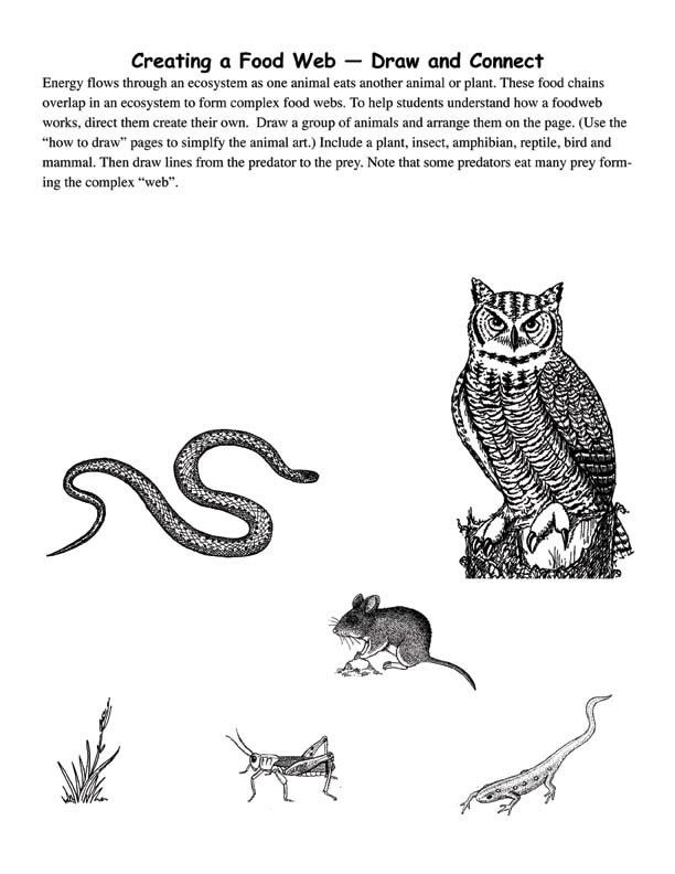 Worksheets Create A Food Web Worksheet simple plants and food webs on pinterest drawing with own animal art exploring nature educational resource