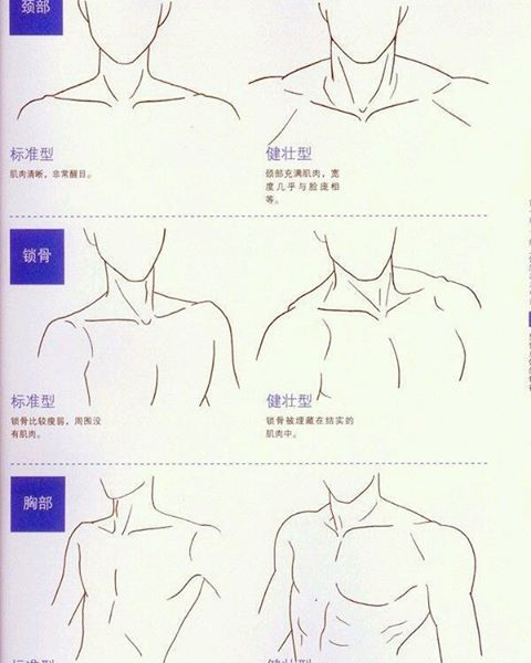 Male torso reference. Left is for uke, right is seme. | Drawing ...