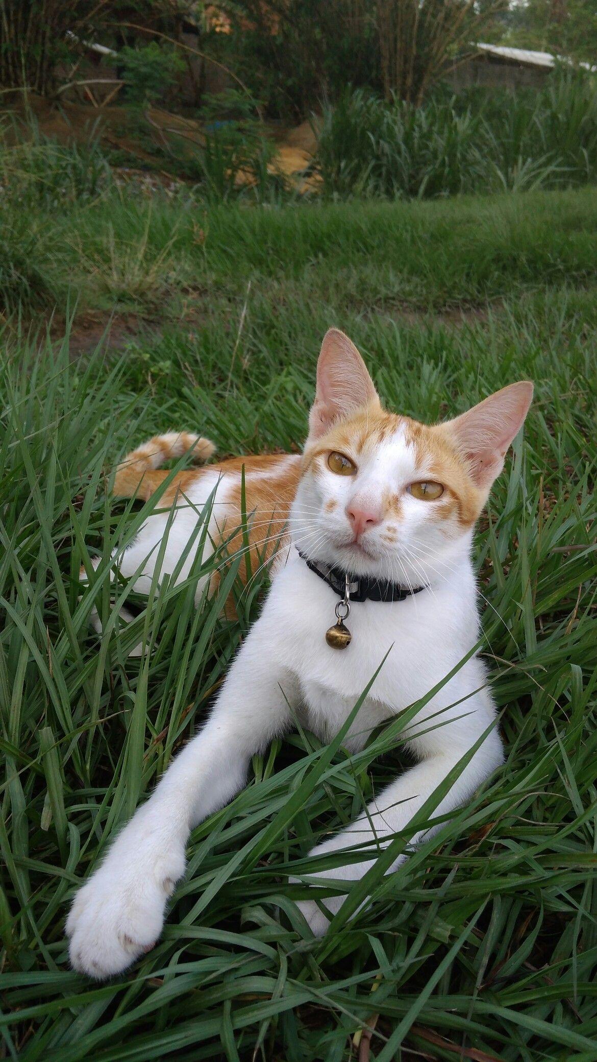 Pin Oleh Dian Di Konsep Karakter Kucing Lucu Kucing Konsep Karakter