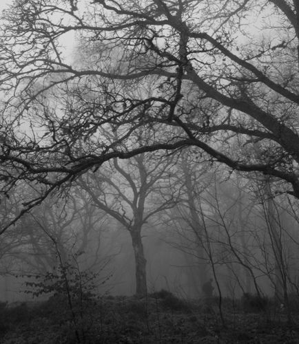 Image result for the forest and its ghosts