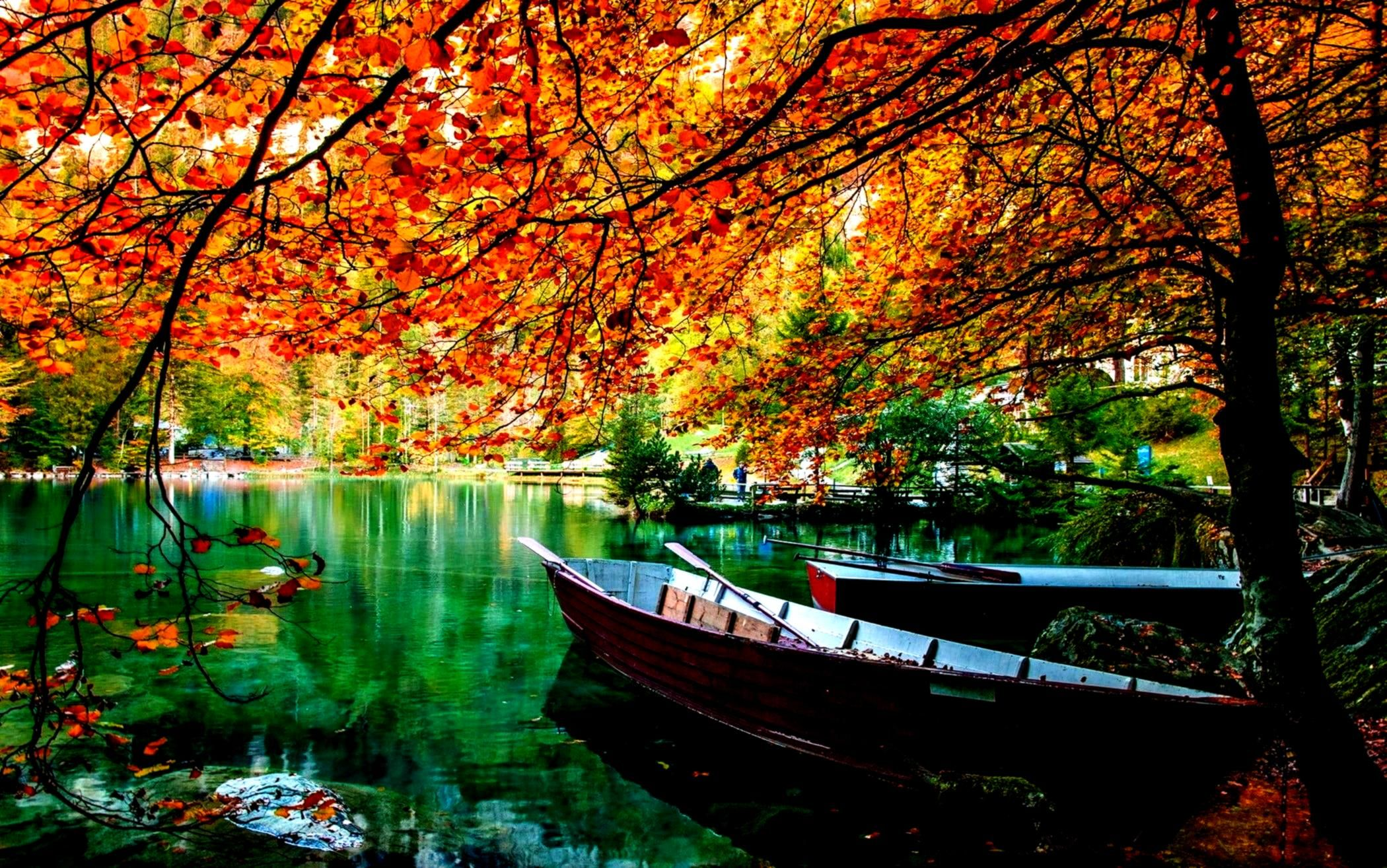 Hdwallpaper Wallpaper Landscape Surround Desktop Leaves Nature Canoe 1080p Green Brown Trees Water Photo In 2020 Tree Hd Wallpaper Autumn Lake Photo Tree