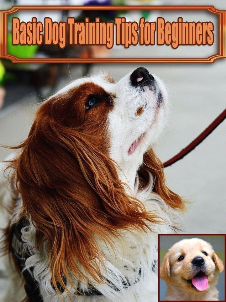 Dog Behavior Training Vancouver Wa and Cost Of Dog