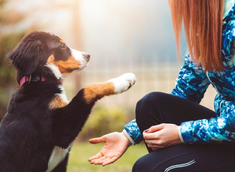 Help My Adult Dog S Whining Is Out Of Control Puppy Training Tips Puppy Find Dogs