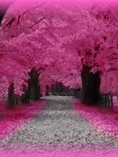 Download Love Pink Road Mobile Wallpaper