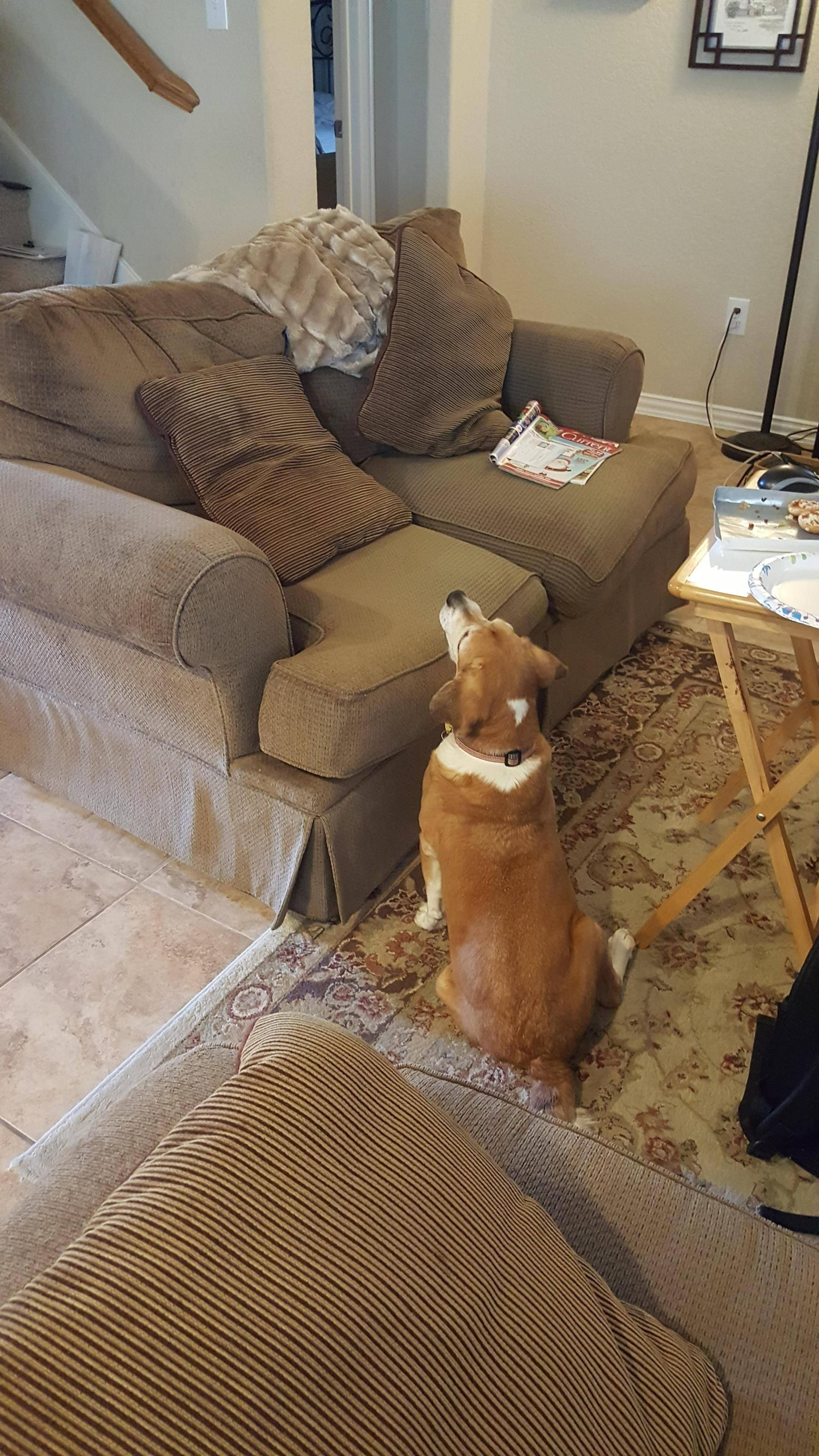 blind dog couch