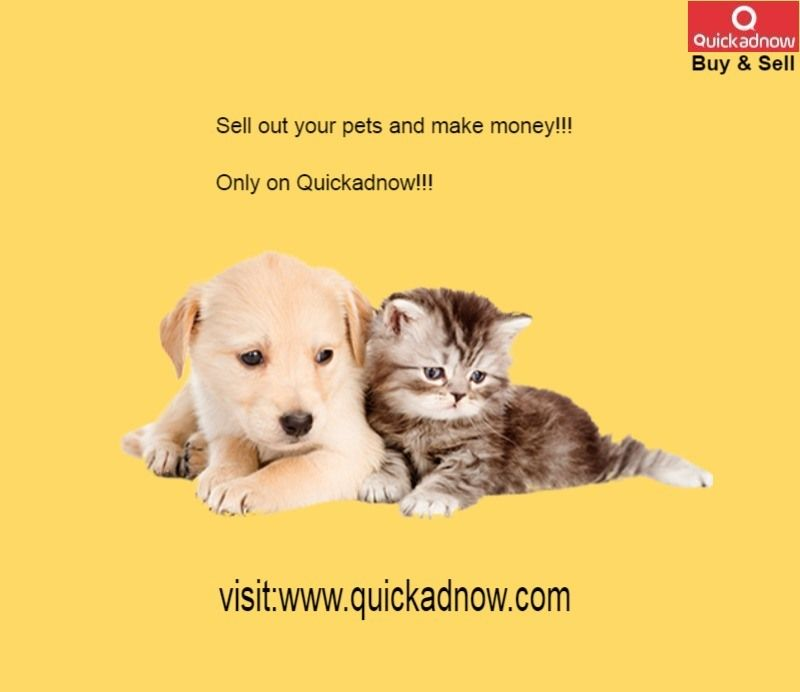 Sell Out Your Pets Meet Potential Buyers Earn Money Your Pet Things To Sell Pets