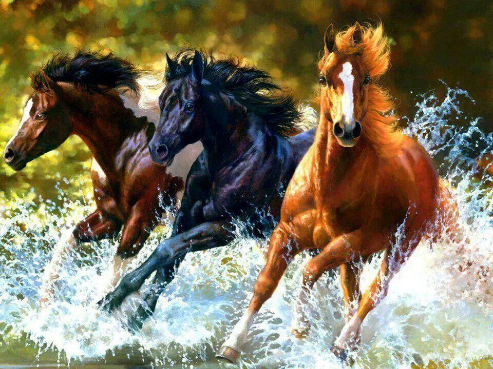 SPANISH HORSE RIDING MOTION CASCADE CANVAS PRINT WALL ART READY TO HANG