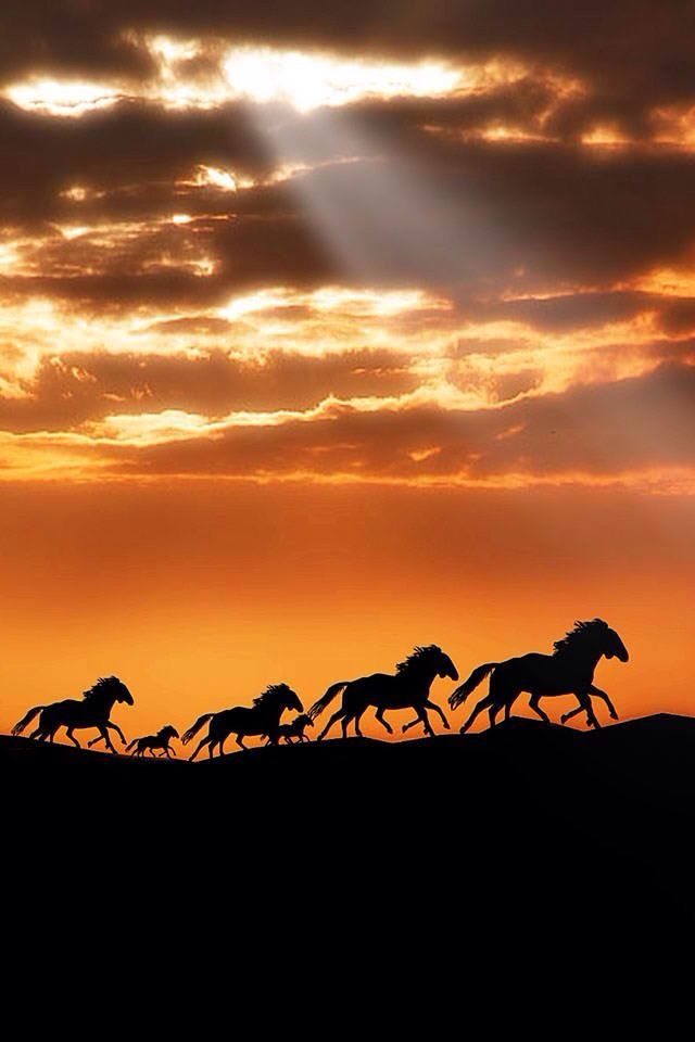 Horses Wild Horses Running Horse Wallpaper Horses