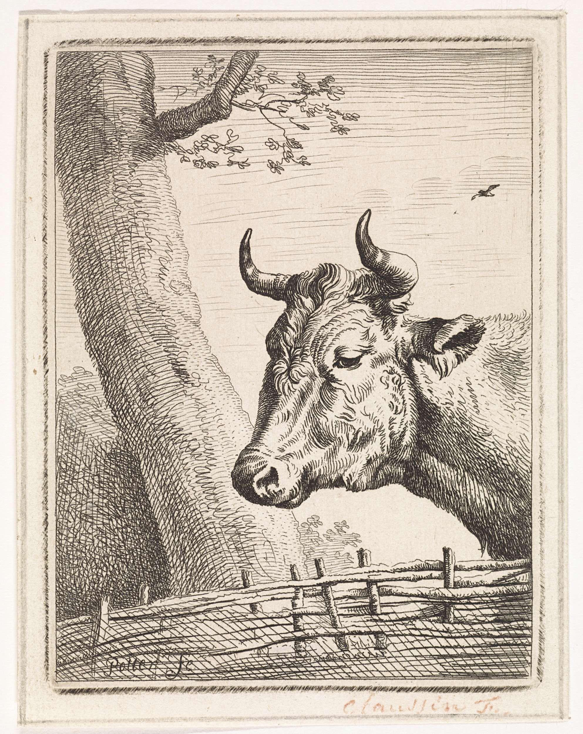 anoniem | Kop van een koe, possibly Ignace Joseph de Claussin, 1805 - 1844 | Koe bij een gevlochten hek.