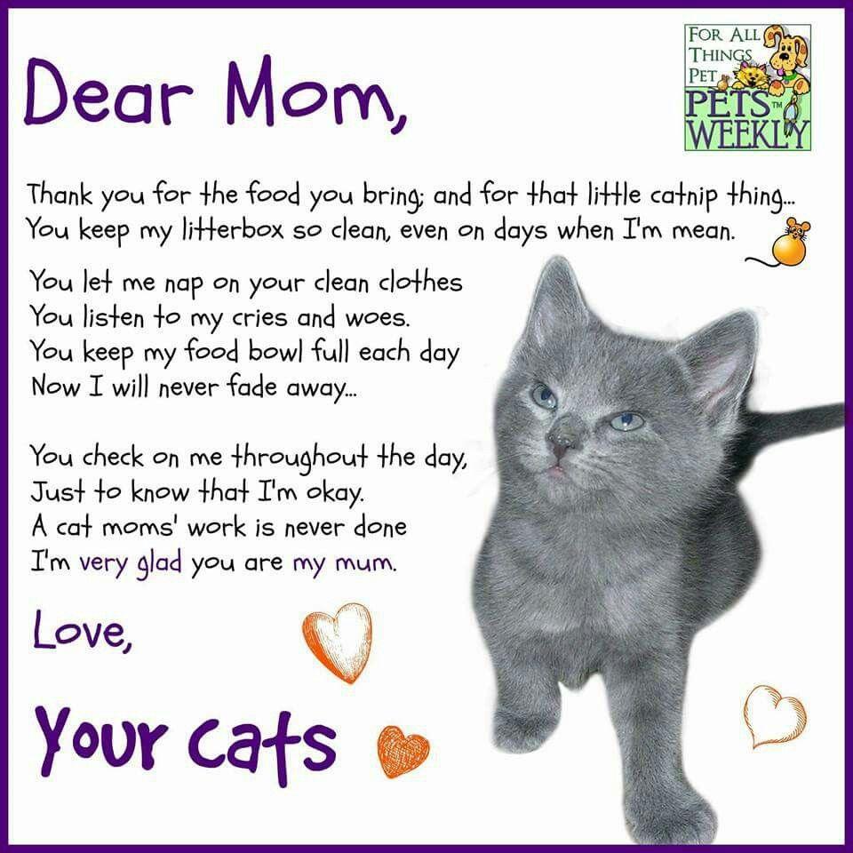 Happy Mother S Day From The Cat Mothersday Cats Catslife Pets Katten Citaten Schattige Katten Kattenvrouw