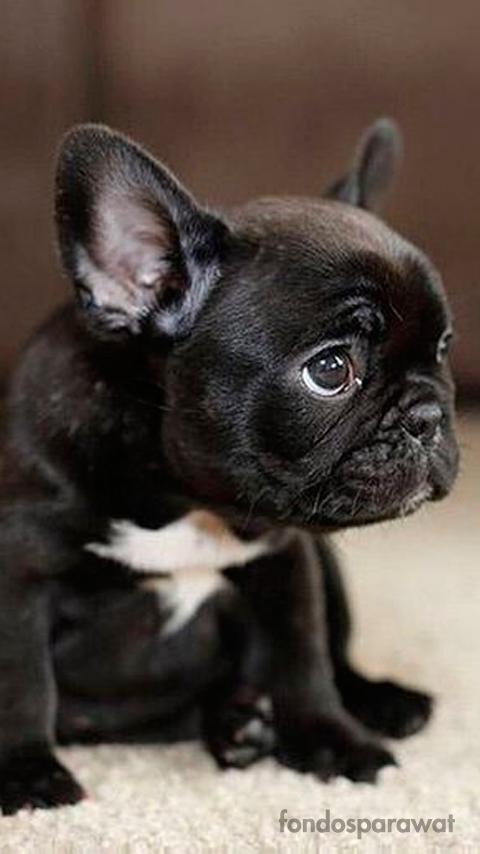 Footaction For Sale Sleeveless Top - Bouledogue Français dog w by VIDA VIDA Buy Cheap 2018 Unisex Discount Largest Supplier Sale 2018 Best Place 2FhgZcef