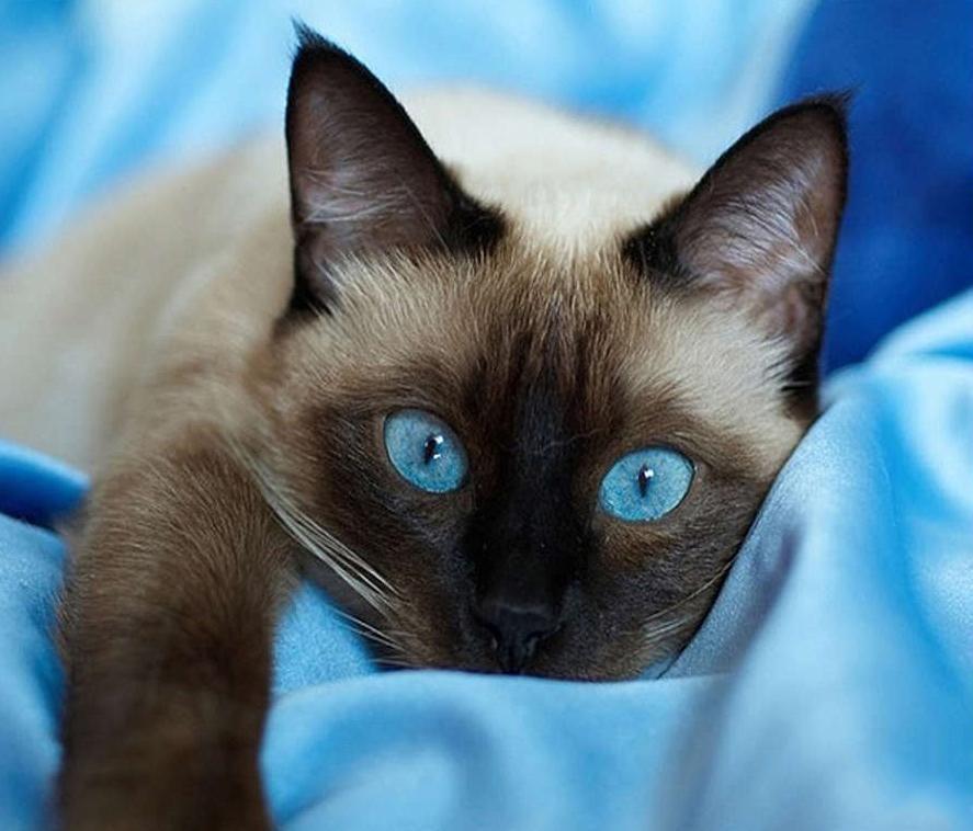 2019 5d Diy Diamond Painting Kits Pet Cat Picture Vm07252 Kittens Beautiful Cats Cats