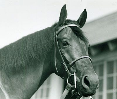 Citation Horse The Great Triple Crown Winner Citation Horses Thoroughbred Horse Horse Racing