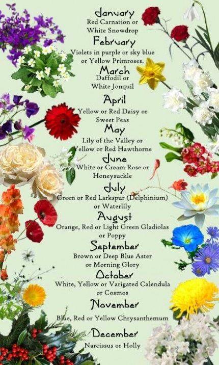 September Birth Flower Morning In 2020 Morning Glory Flowers Pretty Flowers Flower Garden Plans