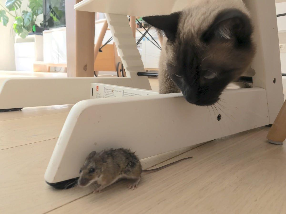 Die Maus Im Haus Gemeinschaftsfest Mamaskind Maus Im Haus Maus Kinder