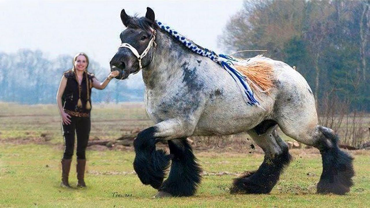 Top 10 Biggest Animals In The World In 2017 Horses, Big