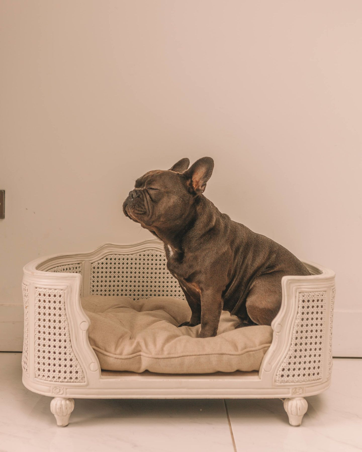 The Most Luxurious Dog Beds Around Dog Bed Dogs Puppies
