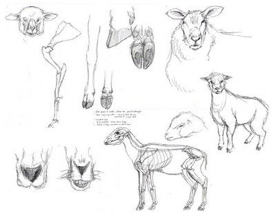 designing and drawing your sheep