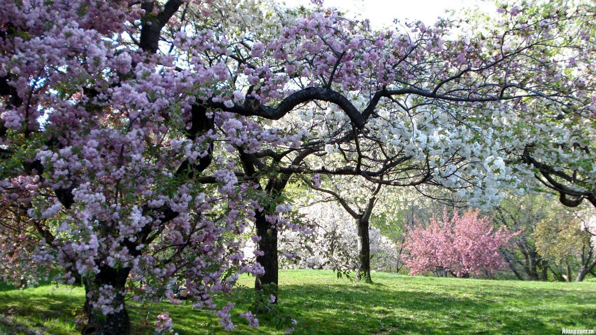 Jardins Botaniques à Proximité